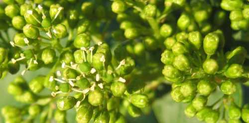 La Floraison De La Vigne Une Etape Cruciale Breves De Ballan