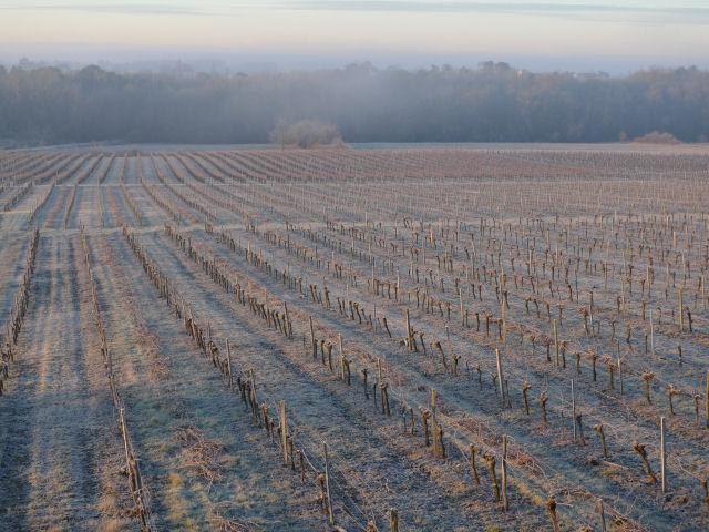 Givre et brume sur le vignoble de Ballan-Larquette