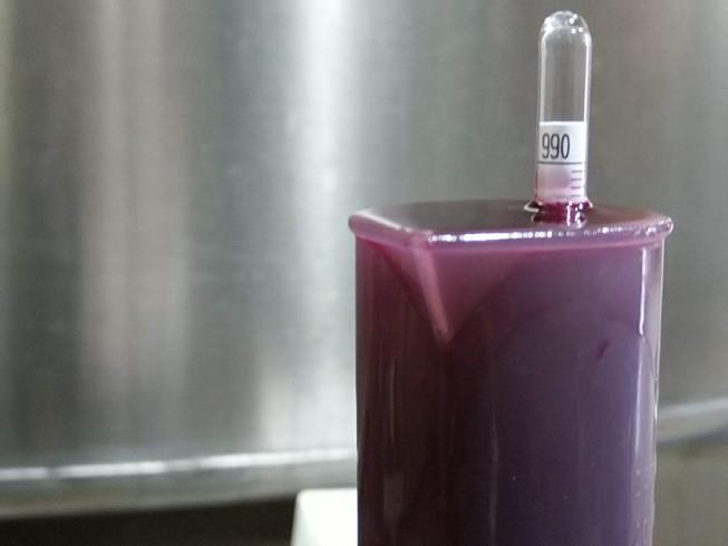 mustrimètre - fermentation